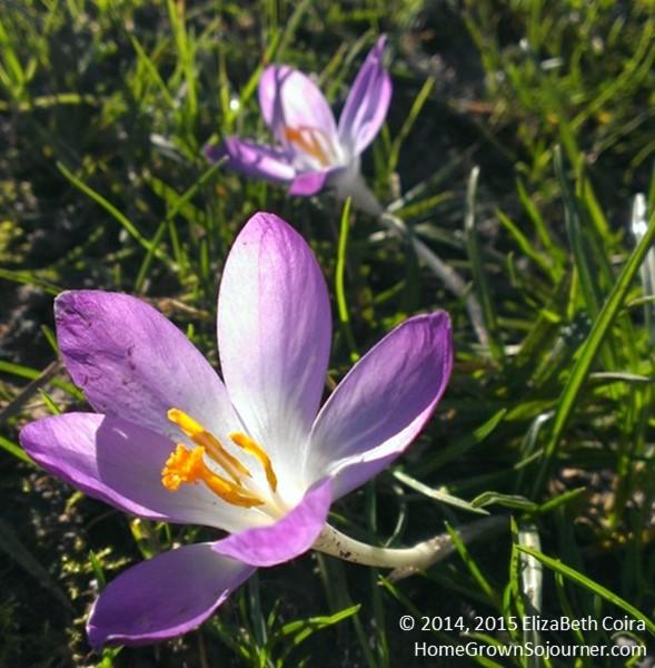 Spring_ElizaBeth Coira_HomeGrownSojourner