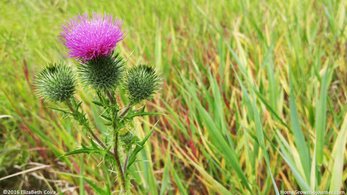 Don't Be Afraid_ElizaBeth Coira_HomeGrownSojourner
