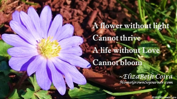 a-flower-without-light_elizabeth-coira_homegrownsojourner